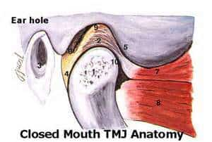 closed mouth tmj anatomy